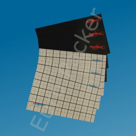 Plastic lijmplaat met raster voor vliegenlamp PestWest